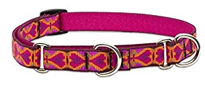 new Lupine 3/4-Inch Heart 2 Heart  Martingale Combo Collar for Medium to Large Dogs
