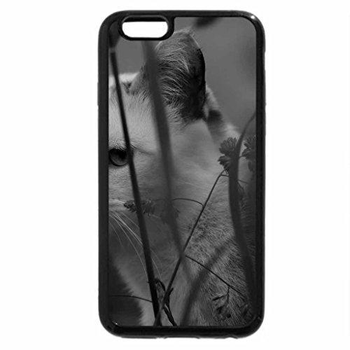 iPhone 6S Plus Case, iPhone 6 Plus Case (Black & White) - Cat hides