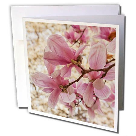 3dRose Danita Delimont - Flowers - Yulan Magnolia blossoms, Cave Hill Cemetery, Louisville, Kentucky - 6 Greeting Cards with envelopes (gc_259356_1)