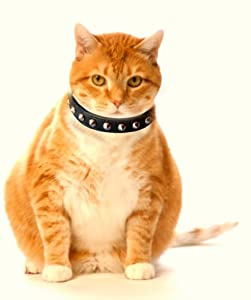 Outlaw Black Studded Leather Safety Cat Collar