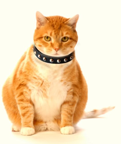 Outlaw-Black-Studded-Leather-Safety-Cat-Collar