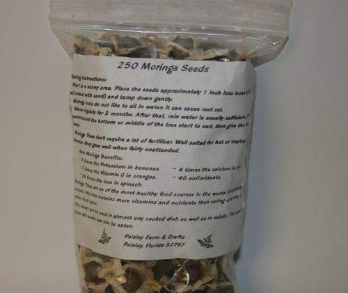 HIGH Germination Seeds:2.5 Oz (250+) Moringa Seeds from, New, ()