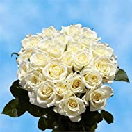 GlobalRose 50 Fresh Cut White Roses - Fresh Flowers Express Delivery - Perfect Long Stem Roses For Birthdays