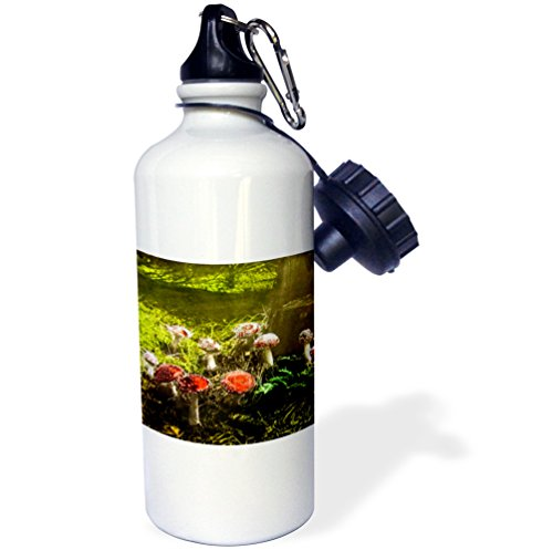 (3dRose Scenes from the Past Magic Lantern - Vintage Fantastic Funky Fungus Mushrooms in the Forest 1890s - 21 oz Sports Water Bottle (wb_246047_1))