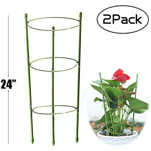 Anzmtosn Large Size 24INCH Garden Plant Support Ring Large Size Garden Trellis Flower Stainless Steel Support Climbing Vegtables Flowers Fruit Grow Cage with 3 Adjustable Rings 60CM 2PCS