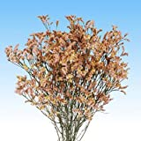 GlobalRose 240 Fresh Cut Peach Limonium Flowers - Fresh Flowers For Birthdays, Weddings or Anniversary.