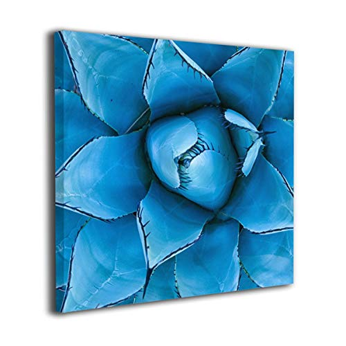 (C-Emily Closeup View of A Blue Agave Plant Canvas Prints Wall Decor Wall Art Stretched and Framed Ready to Hang)