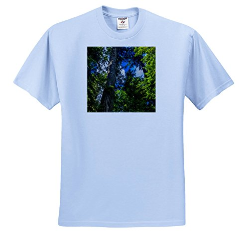3dRose Danita Delimont - Forests - Ancient Douglas Fir Tree In MacMillan Provincial Park, B.C, Canada - T-Shirts - Youth Light-Blue-T-Shirt Small(6-8) (TS_277202_60) (Provincial 8 Light)