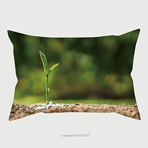 Custom Microfiber Pillowcase Protector Plant Seedling Growing On Fertile Soil With Fertilizer Baby Plant 293874251 Pillow Case Covers Decorative