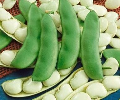 David's Garden Seeds Bean Lima Henderson D450LIBE (Green) 50 Heirloom Seeds