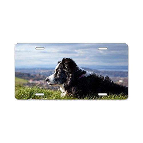 (Cool Border Collie License Plate Frames Stainless Steel Car Licence Plate Covers 4 Holes)