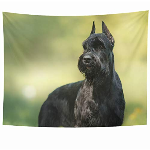 Ahawoso Tapestry 80x60 Inch Mammal Green Active Dog Giant Schnauzer Pet Walking Canine Summer Parks Adult Ball Beard Big Black Tapestries Wall Hanging Home Decor for Living Room Bedroom Dorm
