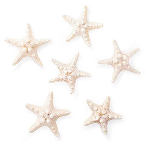Starfish Natural Knobby Mini Beach Sea Stars for Wedding Seashell Crafts (Large, 6 Piece)