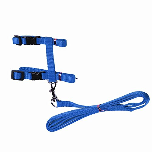 Lil Lion Blue Cat Leash Harness With Adjustable Nylon Collar Lead In H Style - One Size Fits All Animals Pet Dogs Puppy