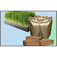 Wheatgrass Growing Kit - Medium