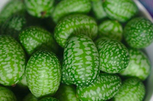 15 Cucamelon Seeds - Mouse Melon, Mexican Sour Gherkin, Mini Watermelon, Melothria Scabra - by RDR Seeds by RDR Seeds (Image #2)