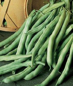 Pod Green Stringless (Burpee Bean Bush Stringless Green Pod 67810 (Green) 75 Organic Heirloom Seeds)