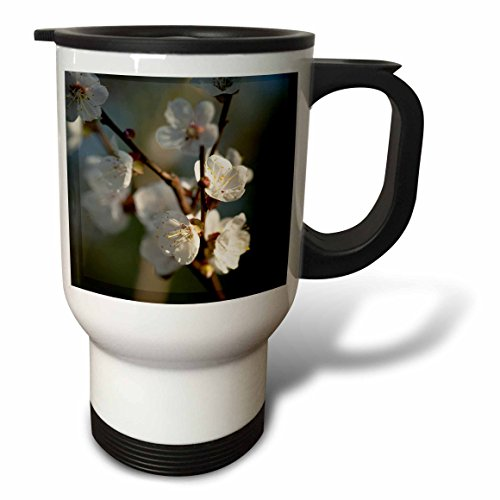 3dRose Alexis Photography - Flowers Sakura Beautiful - White Japanese apricot flowers in the evening light. Charming view - 14oz Stainless Steel Travel Mug (tm_286622_1) by 3dRose