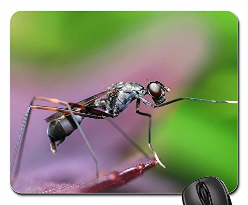 Mouse Pad - Insect Macro Animal Fly Wildlife Detailed - Usps Tracking Detailed