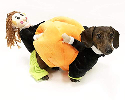 Midlee Carrying Pumpkin Dog Costume