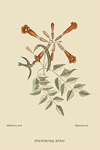HummingBird Paper Poster