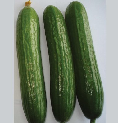 David's Garden Seeds Cucumber Slicing Amiga D3046BMN (Green) 50 Hybrid Seeds
