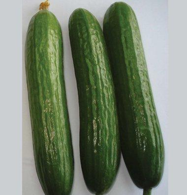 David's Garden Seeds Cucumber Slicing Amiga D3046BMN (Green) 50 Hybrid Seeds