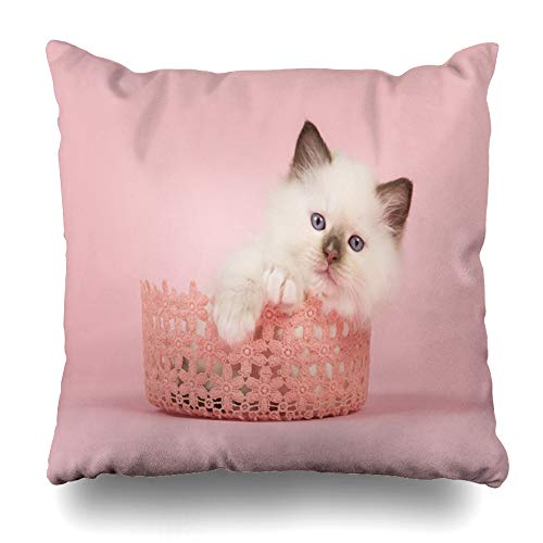 Ahawoso Throw Pillow Cover Kitten Blue Baby Cute 6 Weeks Old Rag Camera Doll Pink Cat Eyes Front View Design Down Home Decor Pillow Case Square Size 18x18 Inches Zippered Pillowcase