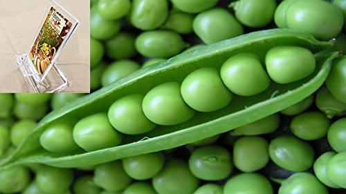 Pea Seeds - 1