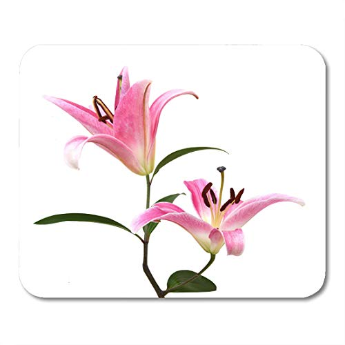 (Semtomn Mouse Pad Lilly Pink Lily Flower Lilium Anniversary Arrangement Beautiful Beauty Mousepad 9.8