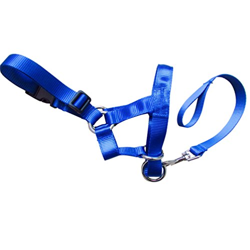 Polyester Universal Vest Style Harness (Haotfire Dog Walking Training Leashes Traction Rope Leash Strap Harness For Dogs Pet Supplies)