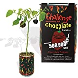 Chocolate Habanero Pepper - All-included-planter-kit . Just Add Water.