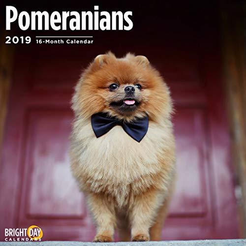 2020 Pomeranians Calendar 16 Month 12 x 12 Wall Calendar by Bright Day Calendars - 2020 Dog Breed Calendar (Pomeranians 2019)