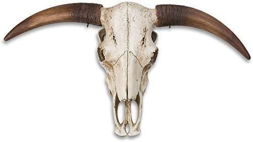 K EXCLUSIVE Massive Full Size Bull Steer Skull