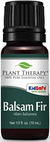 Plant Therapy Balsam Fir Essential Oil 10 mL (1/3 oz) 100% Pure, Undiluted, Therapeutic - Wreaths Fir Frasier