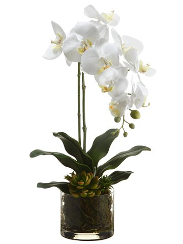 Silk Plants Direct Phalaenopsis Orchid Plant and Echeveria (Pack of 4)