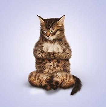 Yoga Fur Katzen Funny Blanko Karte Geburtstag Weihnachten