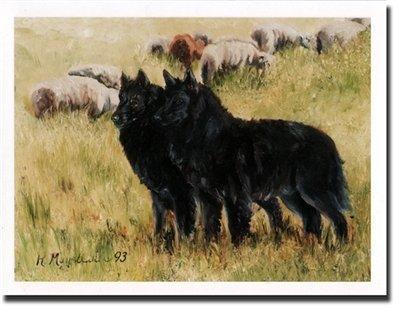 Belgian Sheepdog Pair Notecards