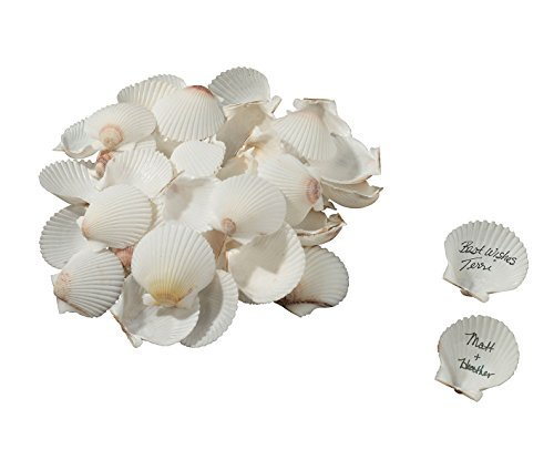 Lillian Rose Guest Book Alternative Coastal Signing Seashells, Multicolor
