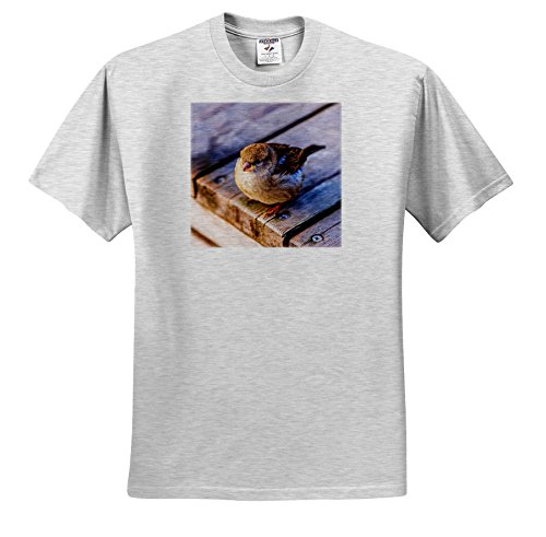 Alexis Photography - Birds - Fat Sparrow On a Wooden Deck. Hard To Fly After Good Lunch - T-Shirts - Adult Birch-Gray-T-Shirt Medium (TS_270245_19) (Sparrow Lunch)