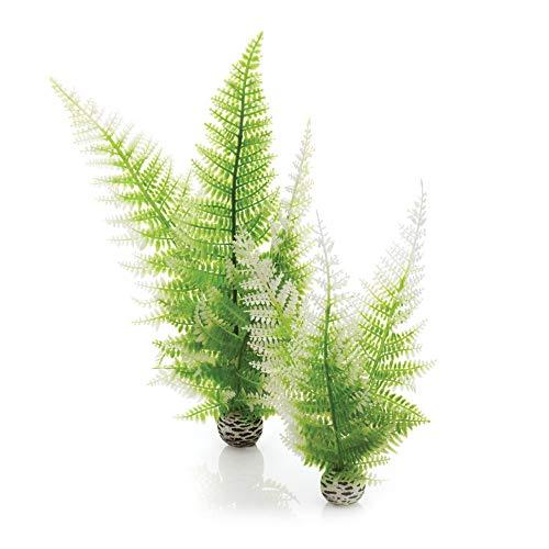 Biorb winter fern plant pack, medium