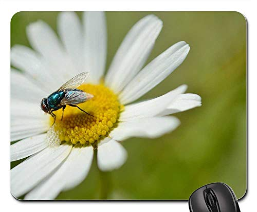 Mouse Pads - Daisy Insect Flower Nature Plant Animal Garden