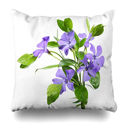 Ahawoso Throw Pillow Covers Periwinkle Green Flat Bouquet Blue Vinca Minor White Nature Purple Flower Herbal Lay Leaf Myrtle Home Decor Pillow Case Square Size 20 x 20 Inches Zippered Pillowcase ()