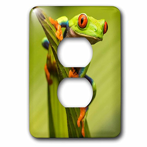 3dRose (6) 2 Plug Outlet Cover (lsp_258550_6) 2 Costa Rica. Red-Eyed Tree Frog - Outlet Costa