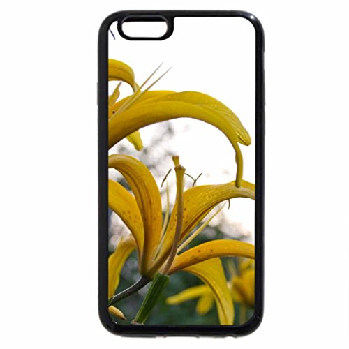 iPhone 6S / iPhone 6 Case (Black) Yellow rose for you...