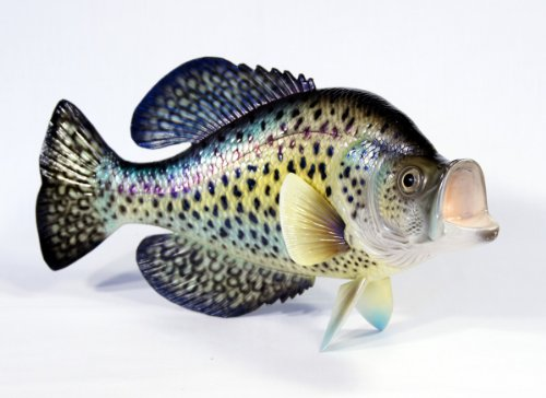 Handpainted Small Dot Crappie Wall Mount Decor Plaque Game Fish Replica 15