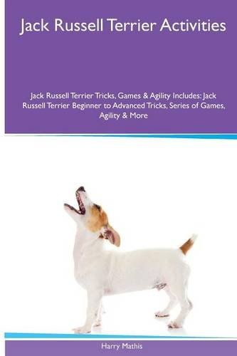 Jack Russell Terrier  Activities Jack Russell Terrier for sale  Delivered anywhere in USA