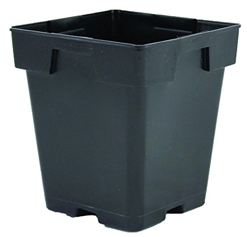 Greenhouse Pots Jumbo 5.5 Inch Deep Square Black Growing Flowers - Case of 288 by growerssolution'