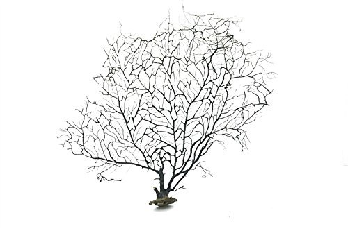 LTWHOME 8 Inch Black Sea Fan Fish Tank Aquarium Decoration, Sea Coral Ornament TR-01 ()