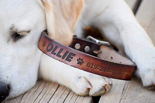 (Dog Collar Personalized Dog Collar - Laser Engraved Dog Collar - Leather Dog Collar - Personalized Leather Dog Collar - Name Dog Collar)
